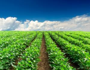 L'apprentissage en agriculture, horticulture et agroalimentaire en Normandie