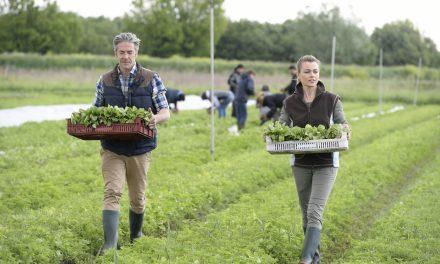 Agriculture en Normandie