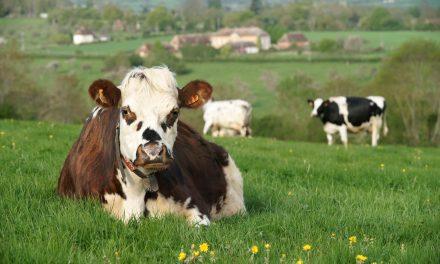 Les métiers de l'agriculture en Normandie