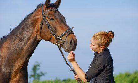 L'apprentissage dans les métiers du cheval en Normandie